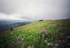 sometimes it makes the heart skip a beat (manyfires) Tags: film field analog landscape washington hiking hike pinhole pacificnorthwest wildflowers pnw silverstar silverstarmountain innova6x9pinhole