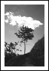 tree and cloud (Roberto Messina photography) Tags: 35mm rodinal canonet28 adoxcms20