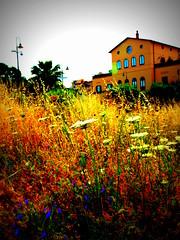 Una utopia può fiorire in un prato accanto alla strada