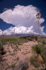 A Building Cumulonimbus Cloud (MorganBall) Tags: arizona plant vertical clouds landscape outdoors landscapes unitedstates desert stormy monsoon agavaceae plantae isolated scenics southwesternunitedstates cochisecounty desertscape spanishbayonet yuccabaccata sansimonvalley morganball