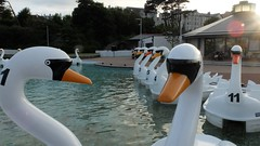 A Swans Life (Derek Hall) Tags: park family summer white water pool sunshine boats outdoors town seaside fuji memories bangor tourist swans northernireland summertime exploration attraction attractions x20 goodweather onthewaterfront pickiepark