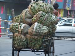 COLLEGE STREET,KOLKATA (Esani (Nibedita)) Tags: india earlymorning packaging rickshaw kolkata westbengal pujo nonpolluting olympusdigitalcamera nibedita drawnby 100biodegradable esani paschimbonga famouscollegestreet