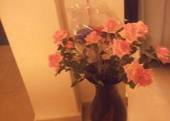 עציץ פרחוני (Kerensmidt) Tags: וזה ורודים עציץ ורדים