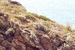 Little Britanny Rocks (lilacandhoney) Tags: ocean life light summer portrait mer france tree night vacances boat sweet dusk fluffy bretagne britanny t tender impressionisme impressioniste