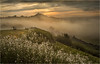 Tor Mists (Chris Beard - Images) Tags: uk summer england mist sunrise dawn glastonbury august somerset mists