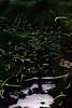 Fireflies (tomoa_fsn) Tags: kyoto firefly efs55250mmf456is eoskissx3