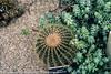 Botanic Gardens In Glasnevin - Ireland