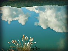 Reflejos y realidad inversa (dlmanrg) Tags: españa naturaleza nature azul cantabria reflejos abandono medioambiente nuves torrelavega denuncia plumeros mijarojos reocín plantasinvasoras