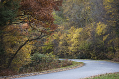(DFChurch) Tags: road autumn mountain color fall leaves northcarolina blueridgeparkway