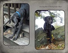 "FINAL Blue Weim 2014 calendar_Page_20 • <a style=""font-size:0.8em;"" href=""http://www.flickr.com/photos/109220014@N05/10955727896/"" target=""_blank"">View on Flickr</a>"