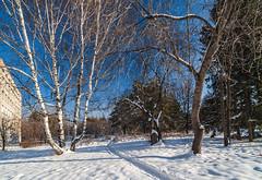 IMG_4052CFSm2048x1409 (Vadim_PP2013 (>330000 views)) Tags: trees winter sky snow cityscape siberia novosibirsk landsape topshots akademgorodok canon450d academgorodok photosandcalendar worldtrekker panoramafotográfico greatshotss tamron1024mm natureandpeopleinnature theoriginalgoldseal flickrsportal esenciadelanaturaleza magicmomentsinyourlifelevel2 magicmomentsinyourlifelevel1 onlythebestofflickr nature'splus