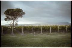 001 - April 2014 Melbourne - Fuji Pro 400H 02 (Richard Selwyn) Tags: leica film vineyard wine stones winery grapes 400h canon28mmf28 fujipro