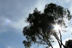 rbol (marthahari) Tags: cielo airelibre crta caminorealdetierraadentro
