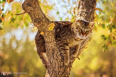"""""""Climb a tree"""" they said (alexgphoto) Tags: street portrait plants pets tree cute green nature leaves animals yellow cat canon outdoors 50mm prime feline funny colorful dof emotion sweet bokeh expression tabby humor perspective adorable climbing m42 chubby feelings feral primelens smctakumar bokehlicious canon60d bokehoftheday"""