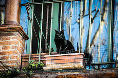 (Jamiecat *) Tags: street black france cat chat noir balcony negro gato toulouse rue balcon
