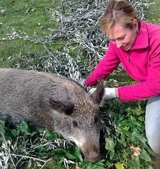 Acuto (Fr) - Patty e Lella,la cinghialina-porcella (Luigi Strano) Tags: portraits natura ritratti boar animali cinghiale