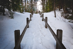 Blanket (anakin1814) Tags: winter snow pine wisconsin stairs spring blanket amberg pikeriver davesfalls