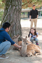 (TKBou) Tags: japan deer  nara   tkbou