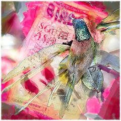 _MG_0832 Green-tailed Sunbird (Soes: artistic fun by my photos) Tags: vividimagination doiinthanonnp nordthailand theawardtree greentailedsunbirdaethopyganipalensis netartii solveigsterschrder