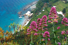 Capris (QuikSink) Tags: flowers vacation italy holiday italia colours exploring exploration 2012 capris