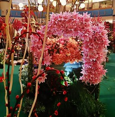 flowers for the Spring Festival (SM Tham) Tags: flowers roses chinesenewyear lilies malaysia shoppingmall kualalumpur atrium flowermarket selangor springfestival pussywillows sunwaypyramid