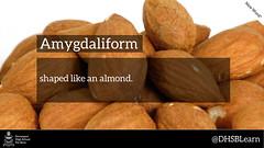 "amygdaliform • <a style=""font-size:0.8em;"" href=""https://www.flickr.com/photos/128300742@N07/16193464600/"" target=""_blank"">View on Flickr</a>"