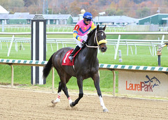 "2014-11-05 (19) r1 Christian Santiago Reyes on #1 Mummi's Hope (JLeeFleenor) Tags: photos photography md marylandracing marylandhorseracing laurelpark jockey جُوكِي ""赛马骑师"" jinete ""競馬騎手"" dżokej jocheu คนขี่ม้าแข่ง jóquei žokej kilparatsastaja rennreiter fantino ""경마 기수"" жокей jokey người horses thoroughbreds equine equestrian cheval cavalo cavallo cavall caballo pferd paard perd hevonen hest hestur cal kon konj beygir capall ceffyl cuddy yarraman faras alogo soos kuda uma pfeerd koin حصان кон 马 häst άλογο סוס घोड़ा 馬 koń лошадь bay maryland"