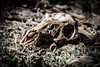 Deer Season is Over (eyeDyllic Photography (Bill Dodd)) Tags: creepy hintofcolor leicavlux114