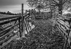 Fenced in. (CWhatPhotos) Tags: over grown photographs photograph pics pictures pic picture image images foto fotos photography artistic cwhatphotos that have which contain canon dslr 5d mk mark 3 iii sacriston fields above tops walk about county durham day cold spring cloudy weather fence fences wood wooden hold mono black white trees tree farm flickr