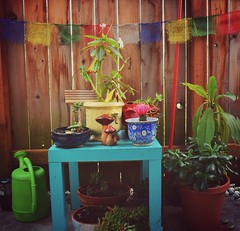 Bohemian Vibes (luontophotography) Tags: plant water cacti garden table happy succulent lomo teal balcony peaceful flags tibet porch hippie vibes planter bohemian vingette