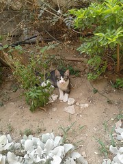 Homeless cat (hsam_32) Tags: pet cats pets beautiful cat kitty cairo kitties homelesscats kittiesegyptian
