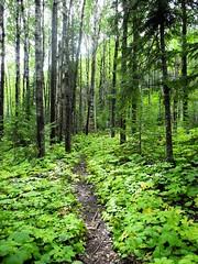 Ginat Woods (reza_cpi) Tags: sleeping giant bay woods thunder