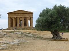 Valle dei Templi (12)