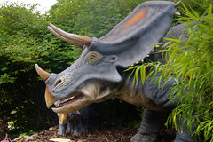 Three horned (Tony Shertila) Tags: england weather gardens clouds model europe day cheshire dinosaur cloudy britain outdoor exhibition chester growth jungle jurassic dinosaurs extinct upton chesterzoo dinosauria botinicalgardens tiassic 20160601104638