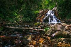 DSC02359.jpg (avi_olmus) Tags: primavera agua paisaje catarata rieraderiells cascadaclotdelinfern