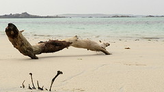 Wood on the beach (patrick_milan) Tags: light beach water sand brittany eau sable bretagne minimalism plage finistere