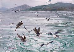 2016 06 13 seagulls (lilya_de) Tags: sea seagulls birds watercolor mixedmedia aquarelle istanbul watercolour coloredpencils bosphorus polychromos