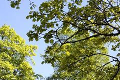 May green (tillwe) Tags: tree green blackforest tillwe allerheiligen oppenau 201605 norschwarzwald hochzeitsfeierjd