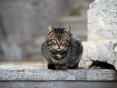 Street cat 144 (Yalitas) Tags: pet cats cat canon kat feline chat kitty gato felino katze katzen kot kedi kass gatta streetcat kotka  kocka  katte  katzchen kottur