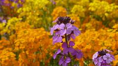 P1070723 (MartinMVZ) Tags: flower prague praha most hradany karlv