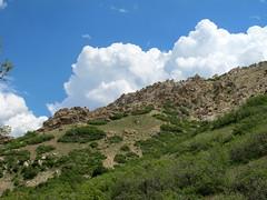 Hiking Trail (chickadee23) Tags: flowers mountains utah hiking trails views benlomond ogden waterfallcanyontrail