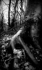 immobilized (JoNeithe) Tags: trees blackandwhite blancoynegro leaves darkness mystical blancetnoir