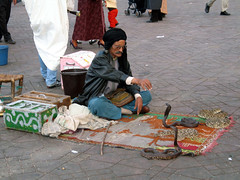 (Mitchell Lafrance) Tags: 2005 travel vacation holiday interesting snake morocco marrakech jamaaelfna