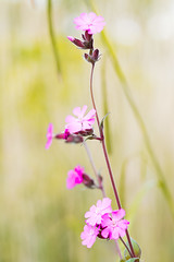 Standing tall (Gregushko) Tags: flowers green nature grass purple tall