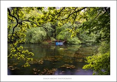 Boat (shaun.argent) Tags: trees lake tree texture nature water leaves woodland reflections landscapes boat spring woods seasons ripon shaunargent
