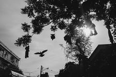 #08 Lost (issaret.chalermsopone) Tags: street streetphoto streetphotography streetphotothailand thai thailand bangkok bkk bird sky bear doll tree