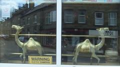 (Chris Hester) Tags: window reflections gold restaurant camels zam elland 9362