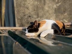 P4085739 (daisuke1230) Tags: cat olympus neko em  m43