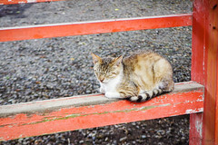 Today's Cat@2016-06-25 (masatsu) Tags: cat pentax catspotting mx1 thebiggestgroupwithonlycats