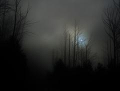 01409 (~maxi) Tags: fog offroad creepy deadtrees cathedralranges marysvillestateforest ladytalbotdrive blacksaturdaybushfireremains